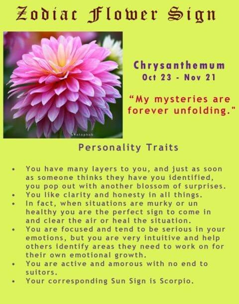 November Birth Flower and Zodiac Sign