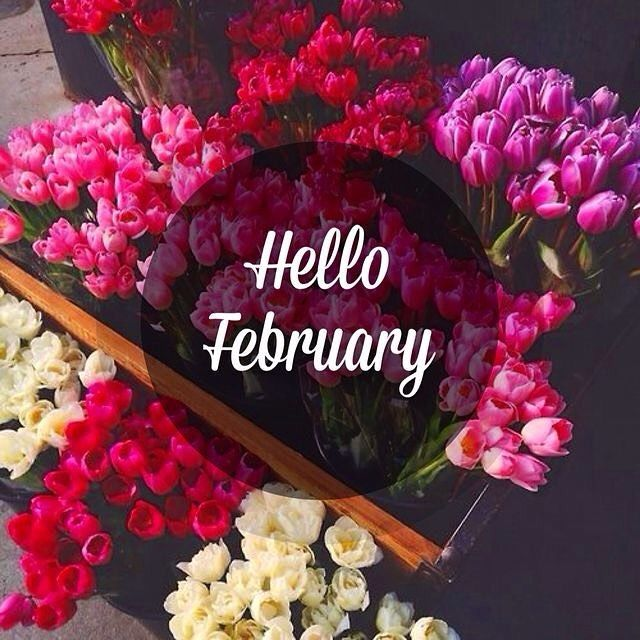 Hello February Flowers Pictures, Photos, Images Wallpapers