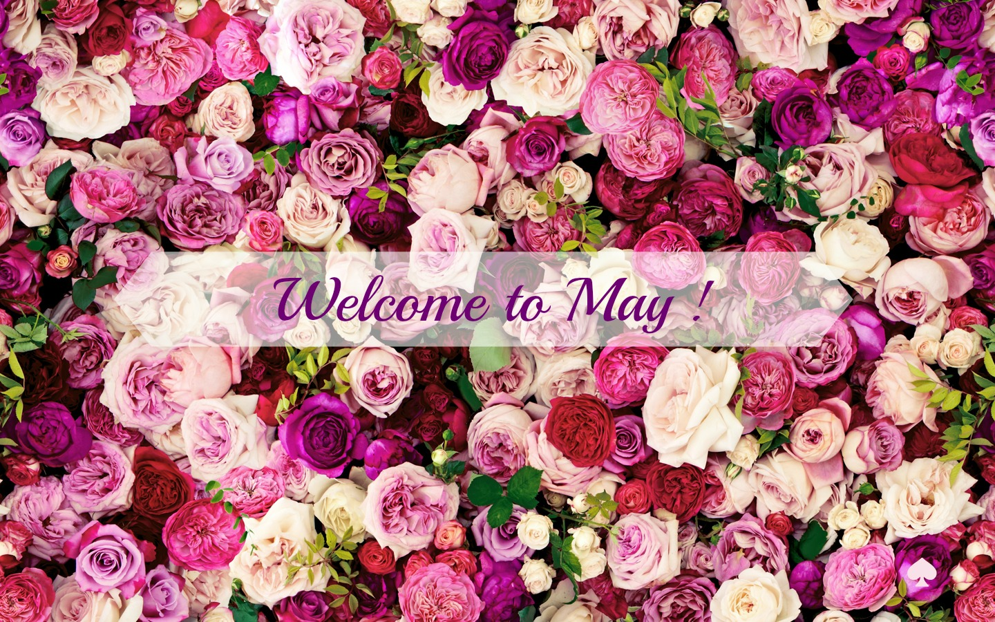 Welcome May Wallpaper, Welcome May HD Wallpaper
